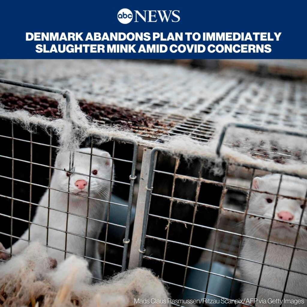 NEW: Denmark's government will not move ahead with its plan to immediately slaug...