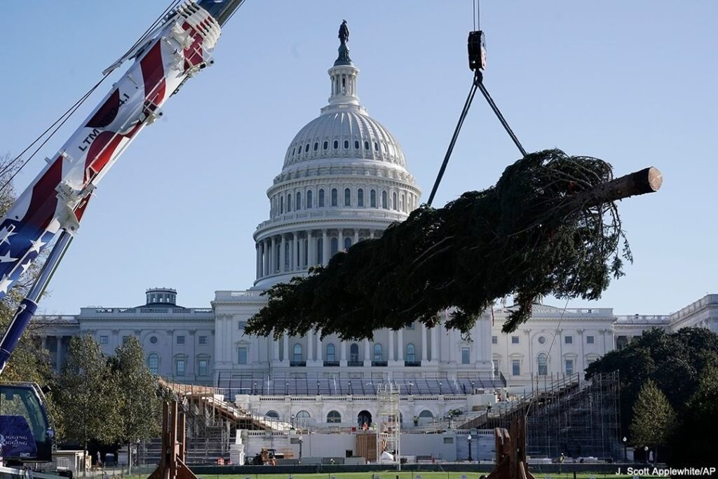 HOME FOR THE HOLIDAYS: The 2020 Capitol Christmas tree is delivered ahead of the...