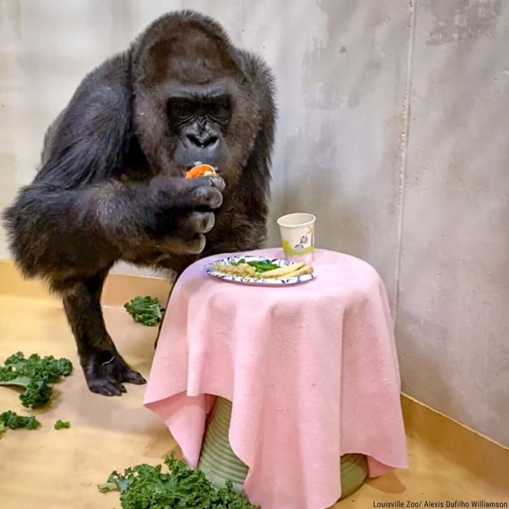 Residents at the Louisville Zoo enjoyed some special Thanksgiving-themed treats ...